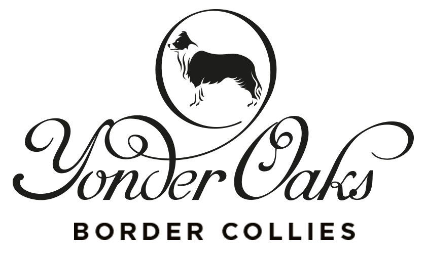 YonderOaks Border Collies